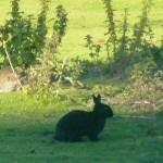 разноцветные кролики рядом с Далвини