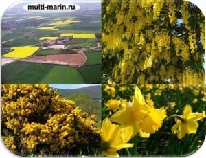 север шотландии - весна