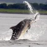 дельфин афалина - охота на семгу без лицензии