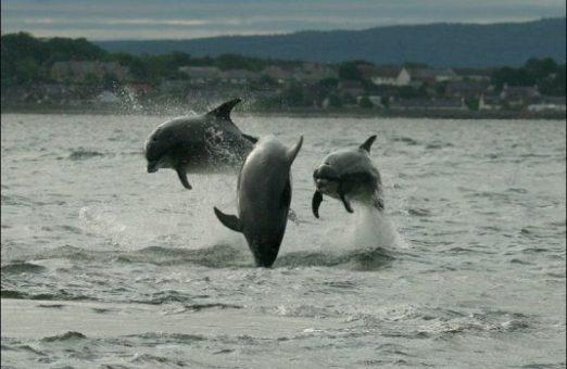 дельфины афалины — вид с косы Chanonry Point на деревню Ardersier