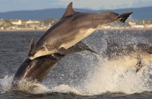 дельфины афалины во время охоты — такие милые на вид