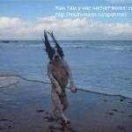 волосы собаки - hair of the dog- опохмел по-шотландски