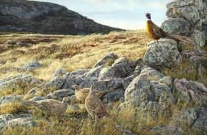 фазаны и фазанихи весной