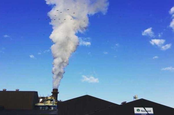 Тот самый дым-пар из трубы Norbord — Дичь готовится на лету;)