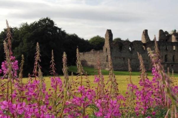 Руины замка Балвини сквозь заросли иван-чая (кипрея)