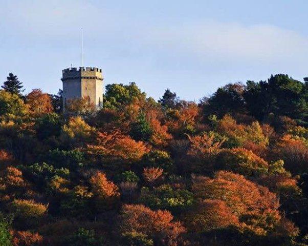 Башня Нельсона — Nelson Tower