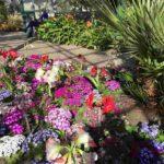 Зимние сады парка Duthie - Абердин-Что посмотреть