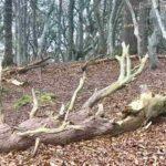 Поваленное дерево возле Башни Нельсона