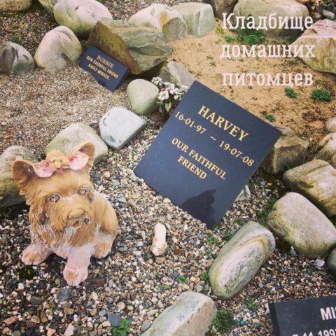 Фрагмент кладбища домашних животных в Каллене